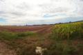 Węgry, pole kukurydzy