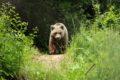 Park Tańczących Niedźwiedzi
