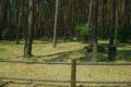 Ławica – leśne pole biwakowe