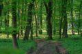Rezerwat przyrody Grabowiec