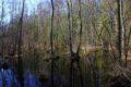 Rezerwat Żądłowice