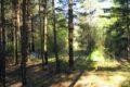 Obrzeża wsi Jeleniewo