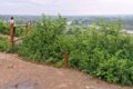 Góra Zamkowa w Mielniku