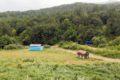Wiatowisko przed wsią Hankavan