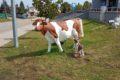 Muzeum mleka