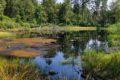 Rezerwat przyrody Torfowisko Borówki